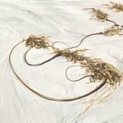 Kelp on Sand