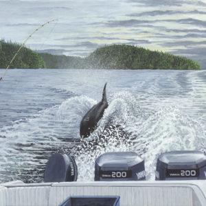 Killer Whale in Nootka Sound