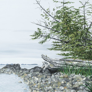 Weathered Log - Price Island